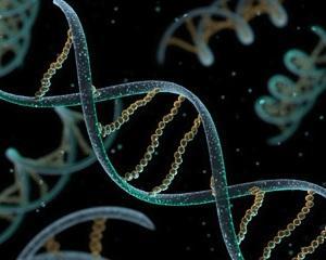 ADN, foto techdaily.eu