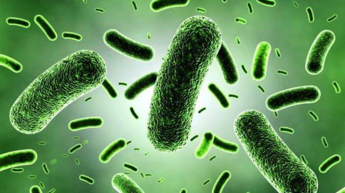microbios de las plantas