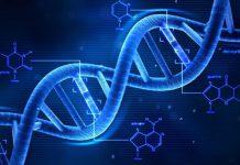 cualquiera puede diseñar ADN