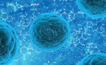 Células madre son creadas a partir de células de la piel