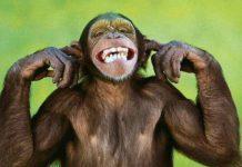 Inteligencia Artificial usa el arte para controlar cerebros de monos