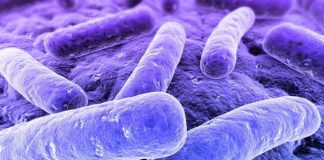 """Nuevo método de """"genómica inversa"""" da vida a bacterias previamente ocultas"""