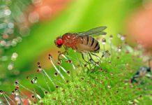 Sistemas nerviosos de los insectos inspiran futuros sistemas de inteligencia artificial